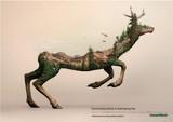 消失的动物(3)